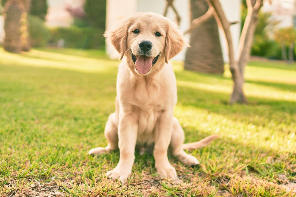 Tips for Moving With a Dog - Take Your Dog for a Long Walk Before Entering Your New Home